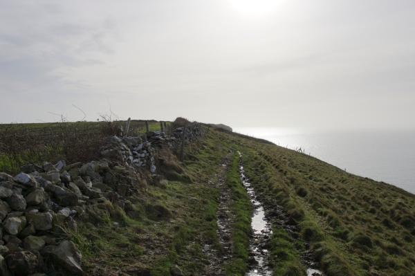 Dorset Jurrasic Coast winter bog - 087