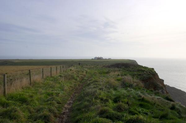Dorset Jurrasic Coast winter bog - 095