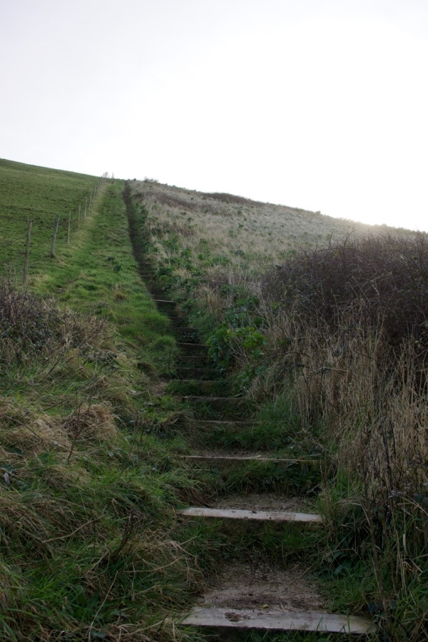 Dorset Jurrasic Coast winter bog - 102