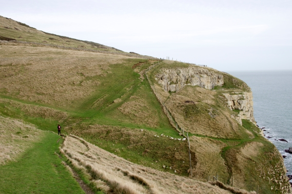 Dorset Jurrasic Coast winter bog - 127