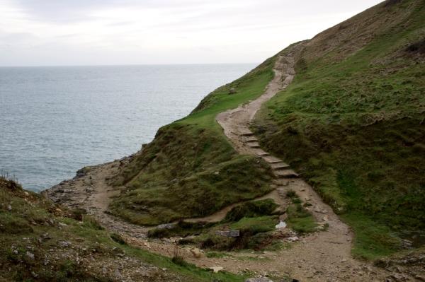 Dorset Jurrasic Coast winter bog - 141