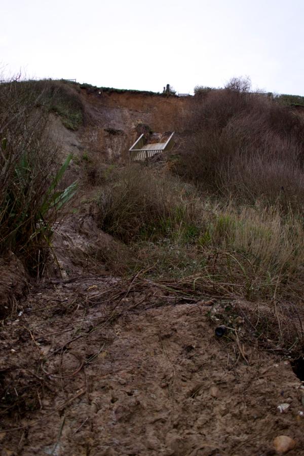 Dorset Jurrasic Coast winter bog - 149