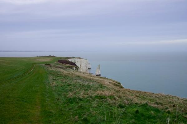 Dorset Jurrasic Coast winter bog - 155